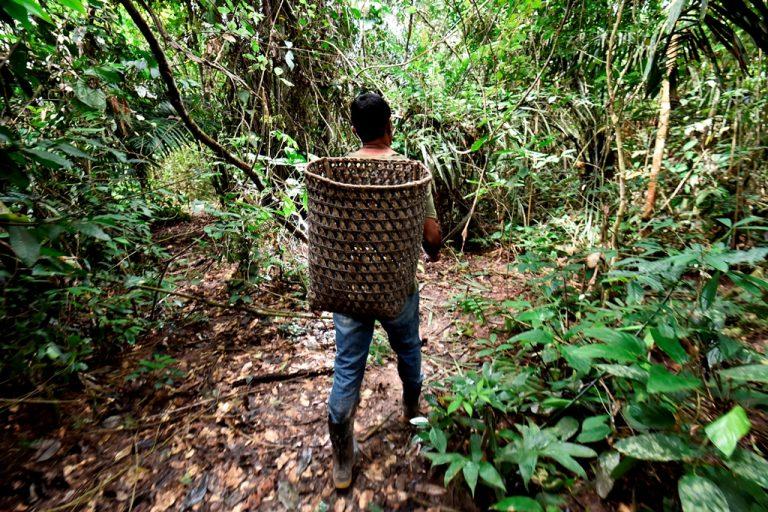 © Adriano Gambarin- WWF Living Amazon Initiative