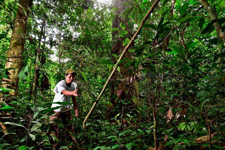 © Adriano Gambarini -WWF Living Amazon Initiative