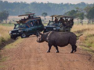 africa rinoceronte