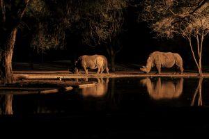 africa rinoceronti