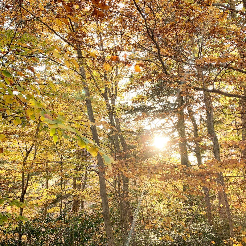 autunno foliage
