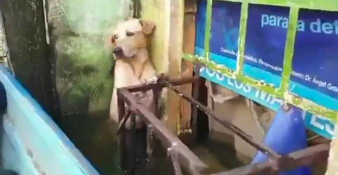 cane aggrappato balcone