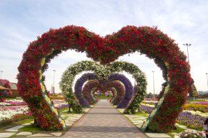 Miracle Garden, Dubai,