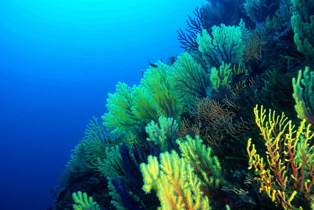 oceano abisso fondale marino