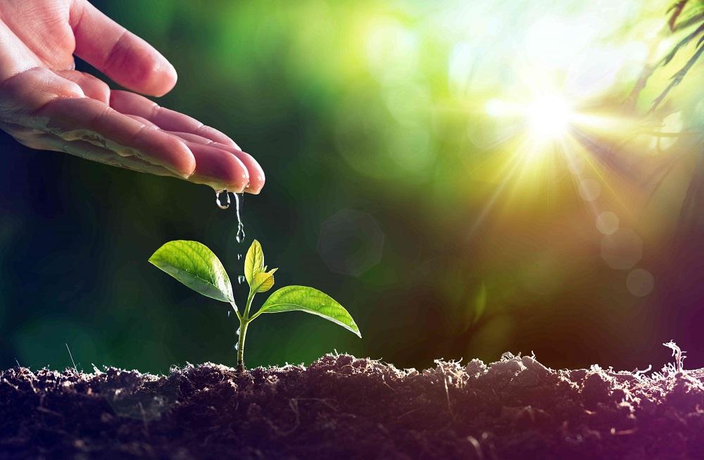 pianta acqua suolo sole ambiente