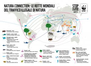 Infografica-mappa-commercio-illegale