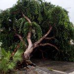 Maltempo, scirocco a 90km/h: strage di alberi a Reggio Calabria, città devastata dal 2° nubifragio degli ultimi 3 giorni