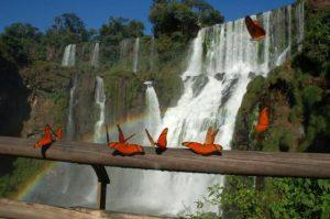 farfalle iguazù