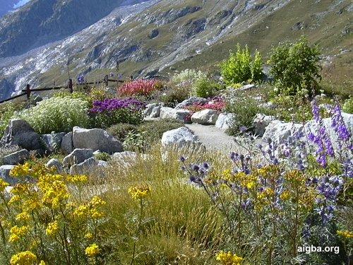 giardino botanico alpino Saussarea