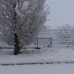 Maltempo e neve in Piemonte, nel Vco la zona dei laghi è la più colpita: 20cm di coltre bianca [FOTO]