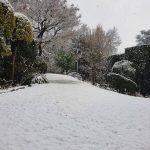 Maltempo Lombardia, neve in pianura: forti nevicate nella Bergamasca, 5cm a Brescia [FOTO]