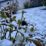 Maltempo, torna la neve in Piemonte: anche Torino si sveglia imbiancata [FOTO]