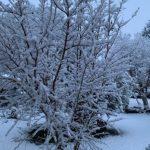 Maltempo: nevica dalla notte su tutto il Piemonte, imbiancata Torino [FOTO]