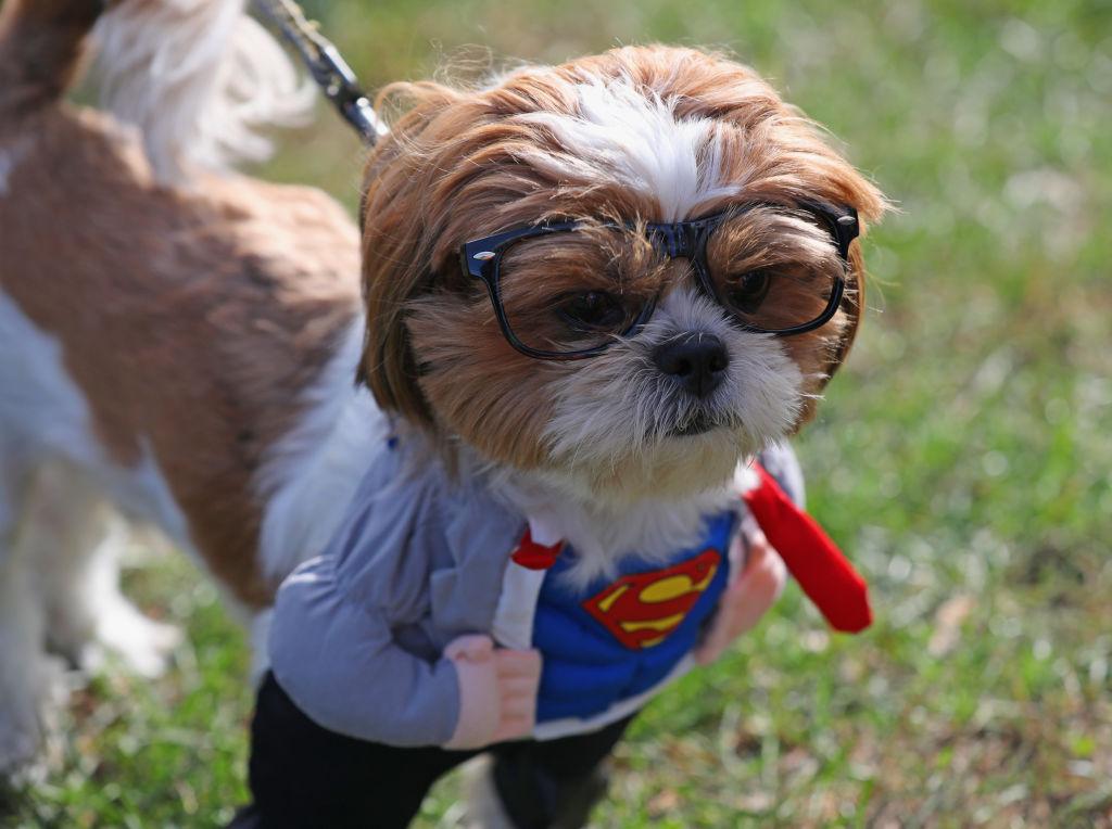 vestiti cani