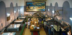 museo storia naturale ulan bator