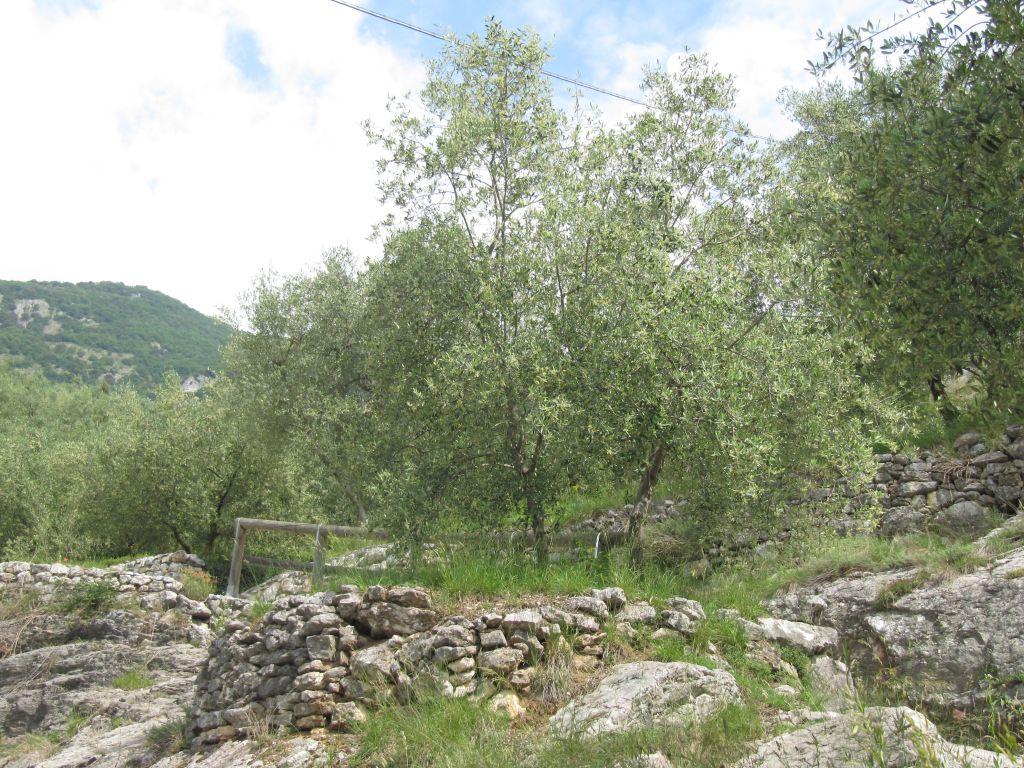 oliveti Trentino