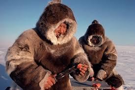 inuit caccia