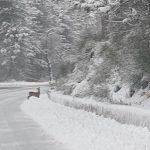 """Maltempo, tanta neve in Abruzzo: -9,8°C a Campo Imperatore, la """"dama bianca"""" è tornata a L'Aquila [FOTO]"""