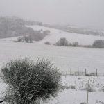 Maltempo, Marche sotto la neve: imbiancato l'entroterra fino ai Sibillini, fiocchi anche ad Ancona e Ascoli Piceno [FOTO]