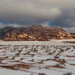 """Meteo, eccezionale nevicata in Arabia Saudita: dromedari ricoperti di soffici fiocchi di neve, incredibile effetto """"dessert"""" nel deserto [FOTO e VIDEO]"""