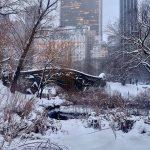 Meteo, tempesta di neve su New York: caduti già 10-15cm e continuerà a nevicare [FOTO e VIDEO]