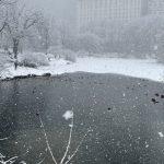 Meteo USA: torna la neve a New York, paesaggi mozzafiato a Manhattan [FOTO]