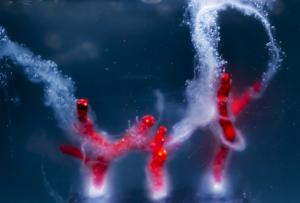 Corallo rosso avvolto nel muco (credits foto ETTORE MORETTI) copia