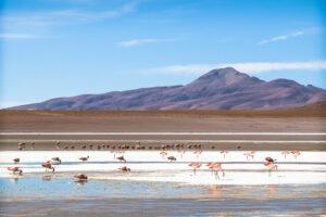Bolivia-Salar-de-Uyuni-Fenicotteri
