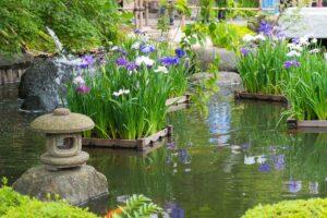 acqua giardino giapponese