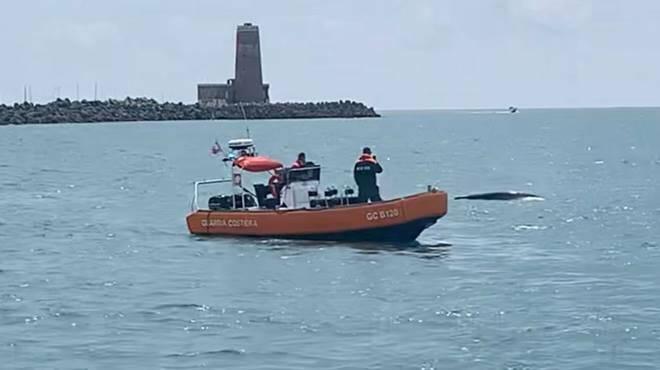 balena fiumicino guardia costiera
