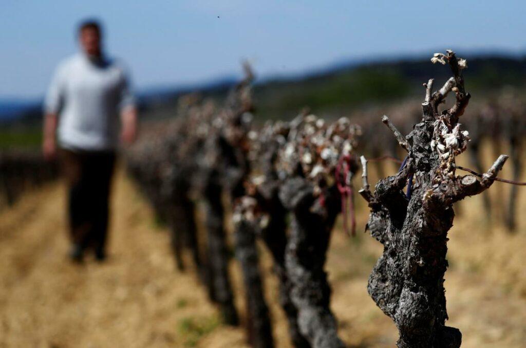 catastrofe agronomica francia