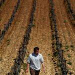 """""""Catastrofe agronomica"""" in Francia, in arrivo nuova ondata di gelo [FOTO]"""