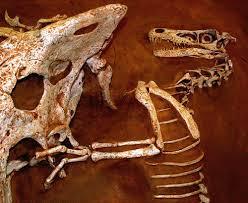 dinosauri gobi