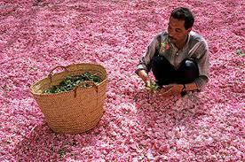 festa rose marocco