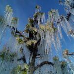 Meteo, gelo in Slovenia: quasi -20°C a Babno Poje, -5°C a Lubiana [FOTO]