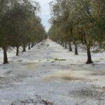 Maltempo Puglia, temporali e forti grandinate in Salento: imbiancata Francavilla Fontana, danni nei campi [FOTO e VIDEO]