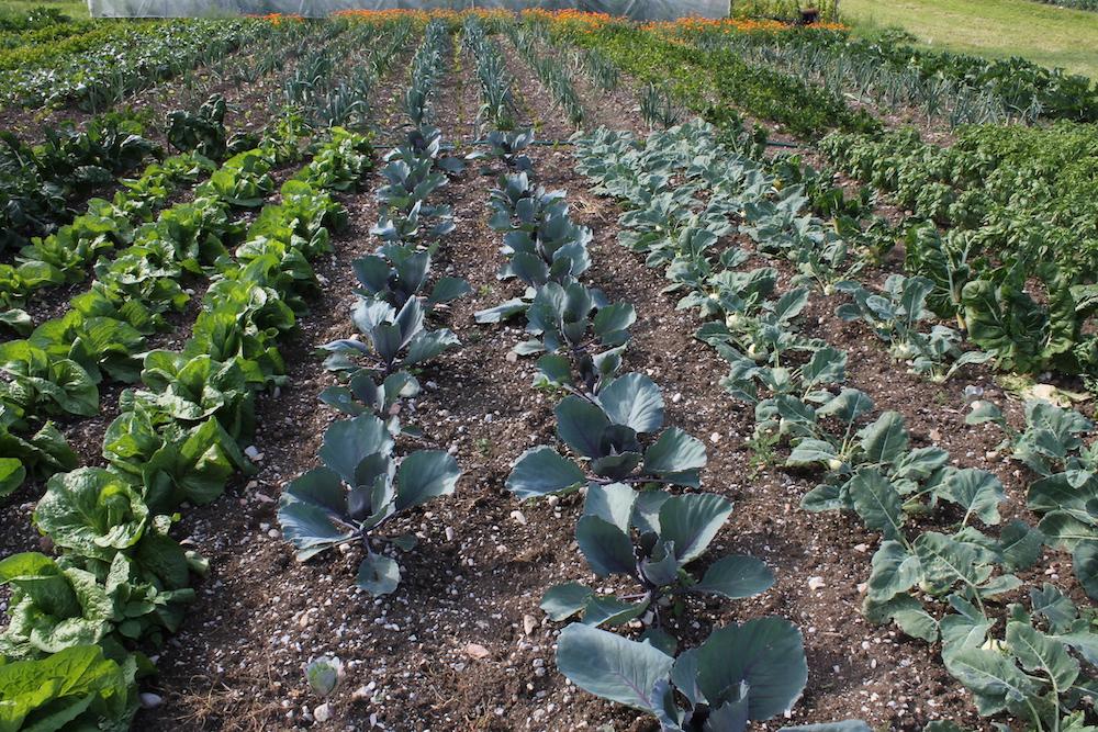 orto sostenibile