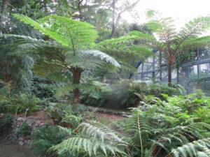 Felceto e serra tropicale orto botanico messina