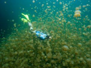 immersione jellyfish lake