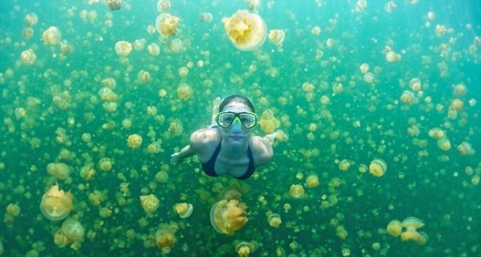 lago meduse d'oro
