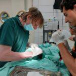 Gaza-Israele, anche gli animali vittime degli attacchi: migliora il macaco colpito dalle schegge di un razzo [FOTO]