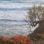 Maltempo Toscana, forti venti e mareggiate lungo le coste: albero cade su 3 auto a Firenze [FOTO]
