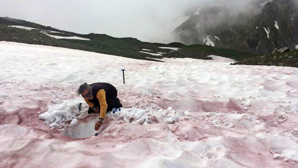 alpi neve rossa