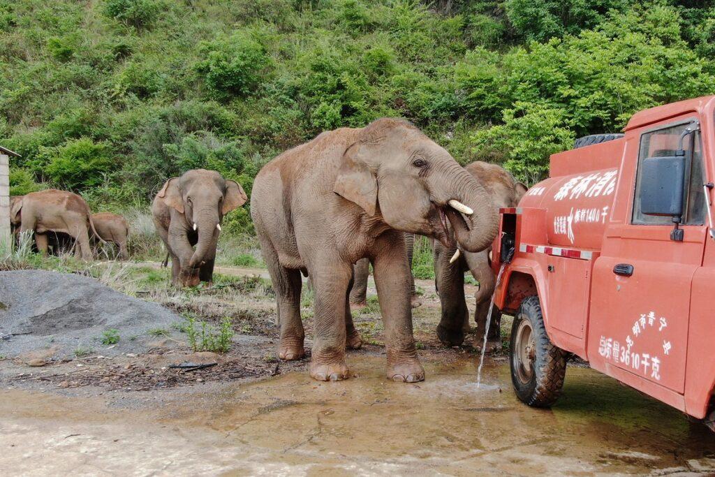 elefanti cina
