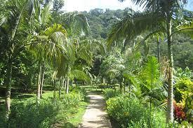 giardino botanico samoa
