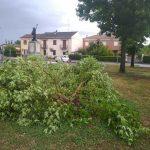 Piemonte piegato dal maltempo: tromba d'aria nel torinese, alberi caduti e strade bloccate nel novarese [FOTO & VIDEO]