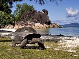 tartaruga Aldabra