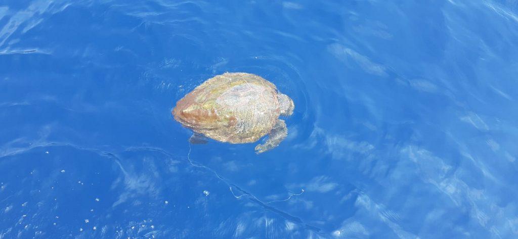 tartaruga marina amp punta campanella