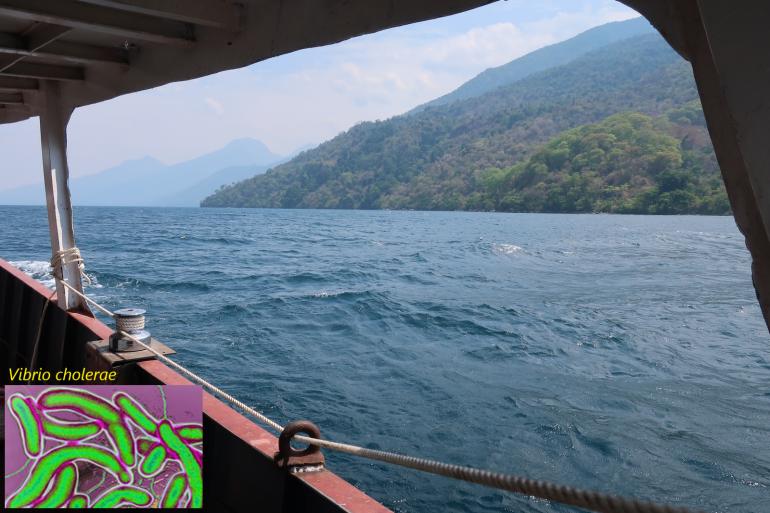 caccia al batterio del colera nel lago Tanganica