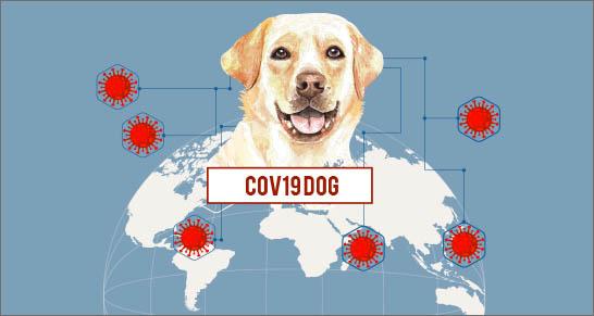 cani coronavirus